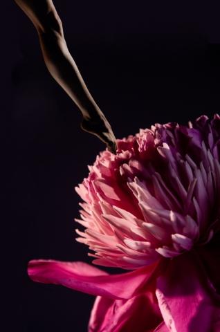 fleur de peau Miwa