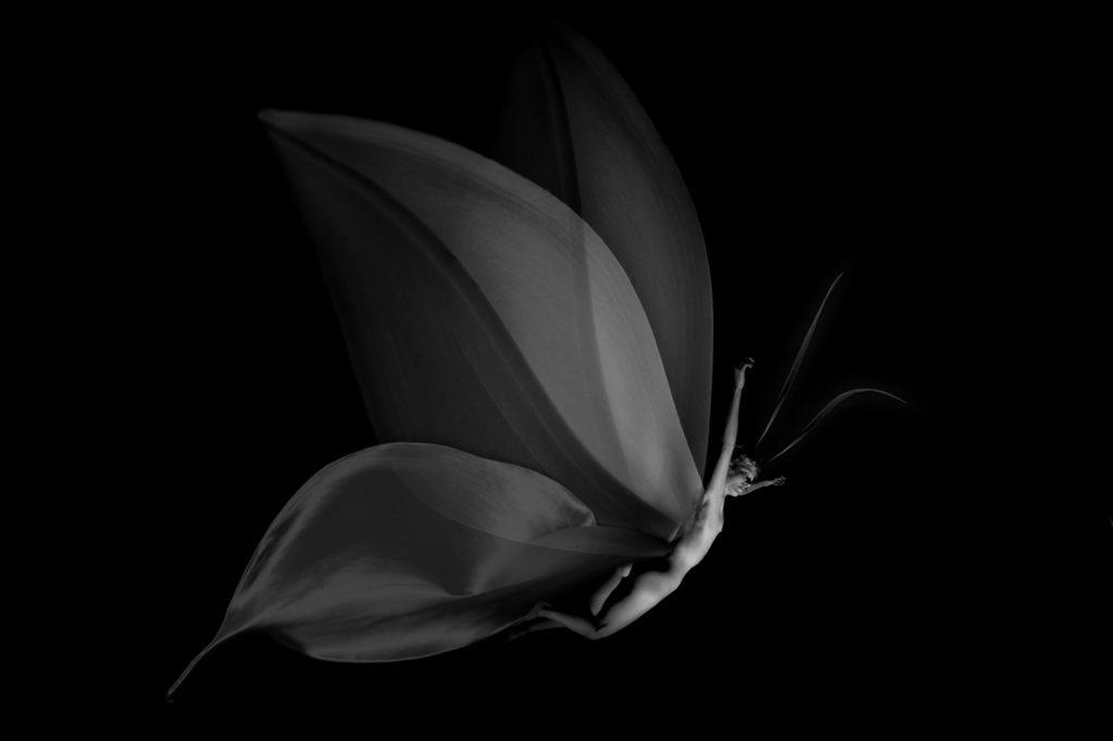 corps et papillon